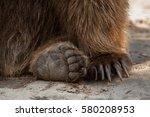 Eurasian Brown Bear  Ursus...