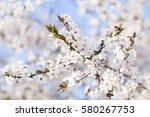 spring beauty. blooming flowers ... | Shutterstock . vector #580267753