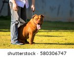 Man Keeps American Bully Dog O...