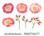 wild rose flowers and leaves ... | Shutterstock . vector #580376677