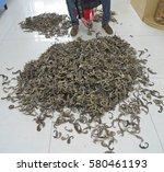 guangzhou  china   circa mar... | Shutterstock . vector #580461193