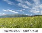 beautiful wild flowers growing... | Shutterstock . vector #580577563