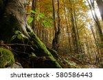 new freshly green plant growing ... | Shutterstock . vector #580586443