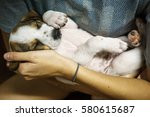 Lttle Puppy Sleeping