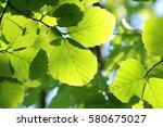 leaves of fresh green. leaves... | Shutterstock . vector #580675027