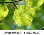 leaves of fresh green. leaves... | Shutterstock . vector #580675033