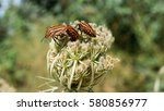 a few bugs coming out from a... | Shutterstock . vector #580856977