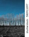 mysterious forest | Shutterstock . vector #580911097