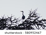 baum mit fischreiher   Shutterstock . vector #580952467