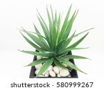 agave isolated on white... | Shutterstock . vector #580999267