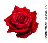 red rose isolated on white... | Shutterstock . vector #581008477