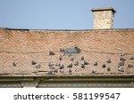 Pigeons. Flock Of Pigeons On...