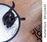 Stock photo black cat on the floor laminate top view 581212633