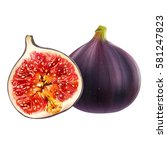 figs on white background | Shutterstock . vector #581247823