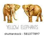 yellow african elephant ... | Shutterstock . vector #581377897