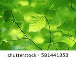 leaves of fresh green. leaves... | Shutterstock . vector #581441353