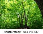leaves of fresh green. leaves... | Shutterstock . vector #581441437