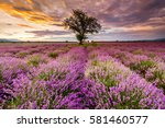 a tree in the middle of... | Shutterstock . vector #581460577
