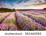 picturesque rows of lavender... | Shutterstock . vector #581460583