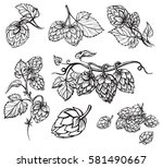 hand drawn engraving style hops ...