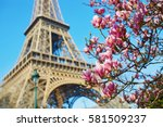 Pink Magnolia In Full Bloom An...