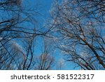forest with frozen trees | Shutterstock . vector #581522317