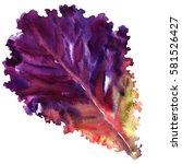 salad leaf  fresh red lettuce... | Shutterstock . vector #581526427