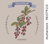 color berberis vulgaris aka...   Shutterstock .eps vector #581579113