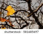 Last Autumn Leafs  Beautiful...
