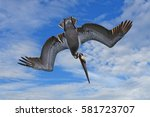 Plunge Diving Brown Pelican ...