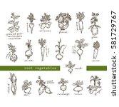 set of root vegetables   free... | Shutterstock .eps vector #581729767