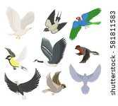 set of different flying birds... | Shutterstock .eps vector #581811583