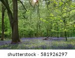 English Bluebell Woodland