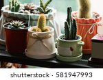 Small Cactuses And Succulents...