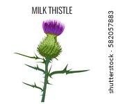 milk thistle isolated on white... | Shutterstock .eps vector #582057883