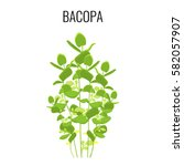 bacopa ayurvedic aquatic plant... | Shutterstock .eps vector #582057907