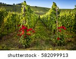 Panorama Of Vineyards And The...