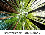 ancient california redwood... | Shutterstock . vector #582160657