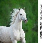 White Beautiful Horse Portrait...