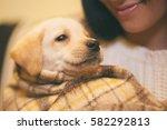 Funny Small Labrador Looking T...