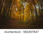 fall in forest | Shutterstock . vector #582307837