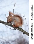 cute squirrel in the snowy park | Shutterstock . vector #582383863