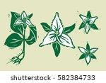 Woodcut Trillium Flowers