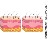 the structure of the skin  skin ... | Shutterstock .eps vector #582399907