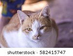 cat face and lovely baby cat | Shutterstock . vector #582415747
