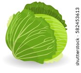 cabbage  object. cabbage icon... | Shutterstock . vector #582453613