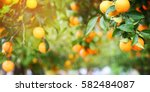 orange garden | Shutterstock . vector #582484087