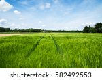 sunny day at wheat farming land ... | Shutterstock . vector #582492553