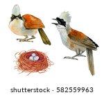 Watercolor Realistic Bird Of...