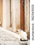 Domestic Cat Sitting By The...
